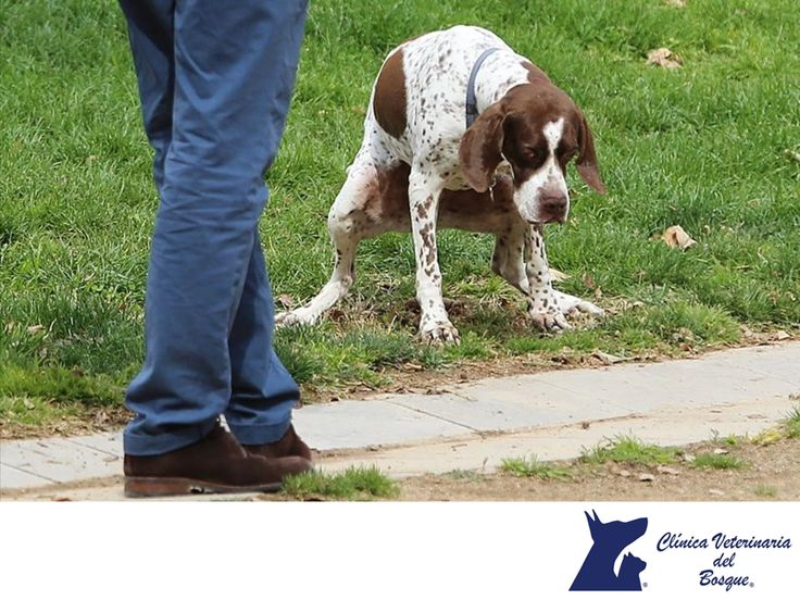 Recoge siempre las heces de tu perro. CLÍNICA VETERINARIA DEL BOSQUE. Cuando saques a pasear a tu mascota, recuerda que es de suma importancia el que recojas sus heces fecales y las deposites en los lugares adecuados, pues son un foco de infecciones e infestaciones parasitarias, tanto para ellos mismos como para los humanos. En Clínica Veterinaria del Bosque te invitamos a visitar nuestra página web www.veterinariadelbosque.com, para conocer nuestros servicios. #veterinaria