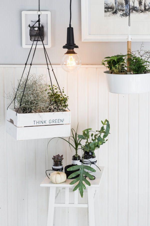 249 besten houseplants bilder auf pinterest gr npflanzen for Raumgestaltung mit zimmerpflanzen