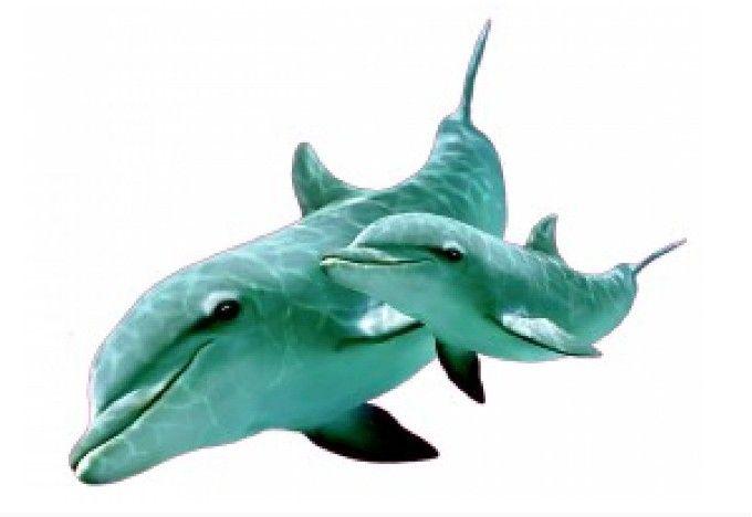 Muursticker dolfijn met jong