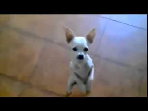 Video Lucu Hewan Joget Bang Jali Harus Lihat http://youtu.be/INhyWZbva2w