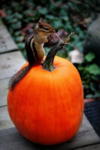 Chipmunk - I know you can but I draw the line here...