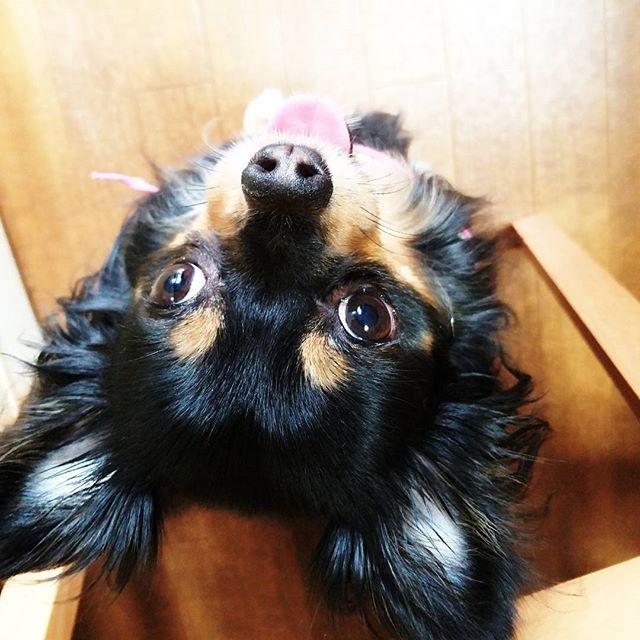 ルチル大好きだよ❤🐶って 言っても見てる先は👀 おばあちゃん👵💕 だから上から写真撮ったった(o^O^o)✨ #レインドロップ #リンパトリートメント #箱庭療法#箱庭セラピー #REIKI#気の流れ #オラクルカード #手話#愛犬#介助犬 #聴導犬#盲導犬 #chihuahua#dog #住之江区#大阪市 #児童デイ#発達障害 #心理カウンセリング #チャクラ調整 #介護施設#大好き #高齢者デイサービス