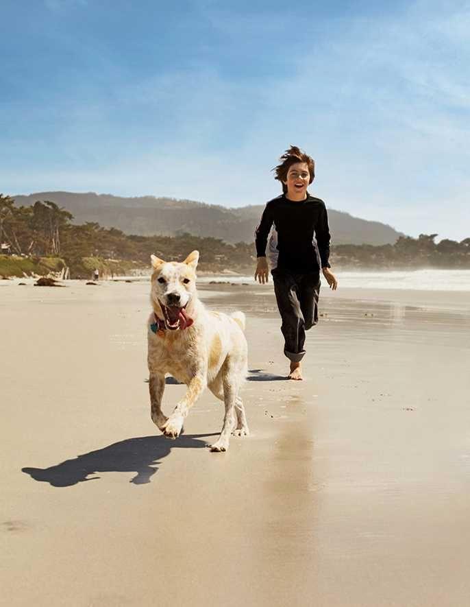 ビーチで遊んで過ごす!サンディエゴ旅行の観光アイデア。