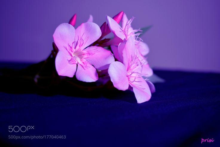 Nerium oleander by PritiSinha. @go4fotos