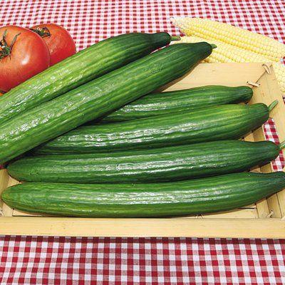 Green Ice Improved Cucumber   Cucumber seeds, Cucumber ...