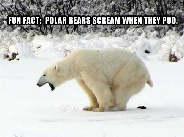 polar bear pooping, funny pictures