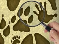 Animal track identification quiz