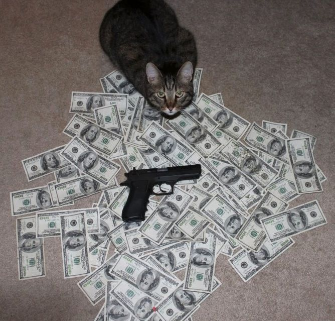 Cats with fat stacks of cash! http://cashcats.biz/post ...