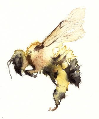 solo bumble KO12limited edition giclee print 130 x 160mm£51.70Click here for more details