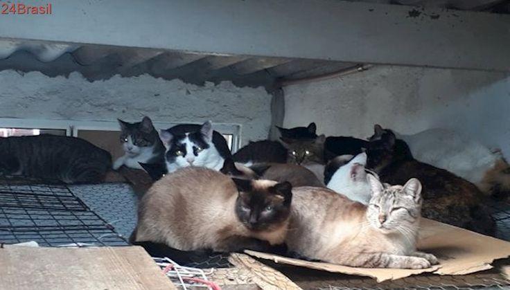 Protetora pede doação de ração para cuidar de gatos abandonados e doentes em SP
