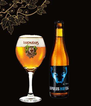 La Lupulus Hopera, est une bière de type pale ale, titrant à 6% d'alcool, et refermentée en bouteille. Le caractère subtil de cette bière s'exprime à travers son côté houblonné, avec une amertume prononcée mais habilement contrôlée qui affiche 35 Ibu.