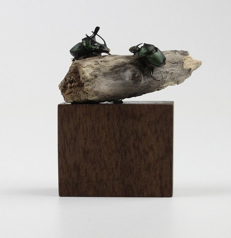 Beetles in Their Natural Habitat - Kebei Li
