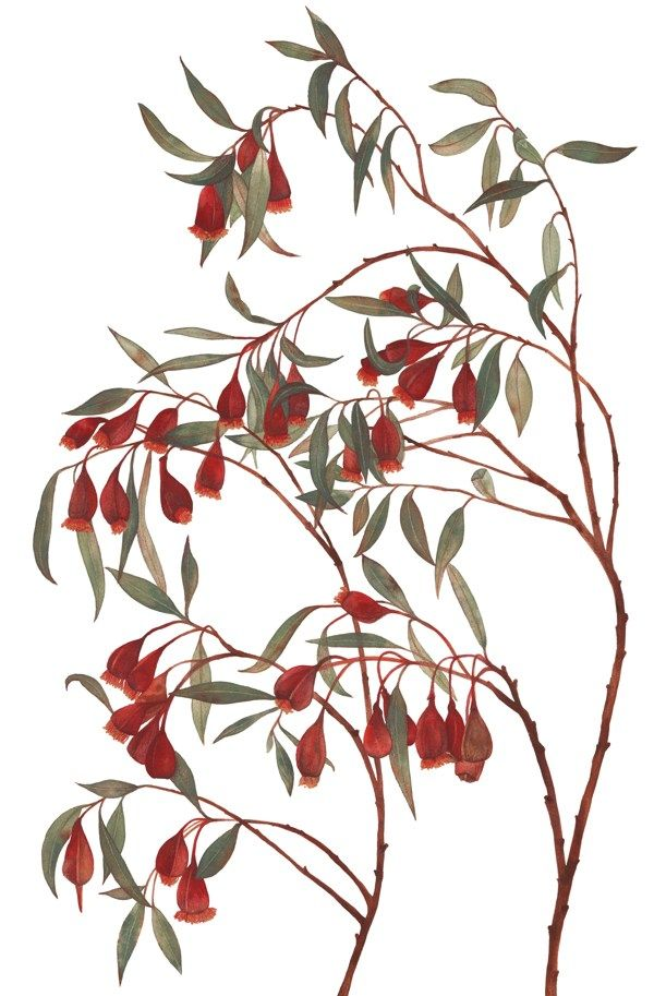 Australian Native Flora by Natalie Ryan, via Behance
