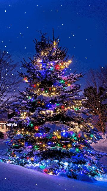 MOVING Snowing Twinkling Christmas Tree  Photo - Snowing Christmas Light Gif