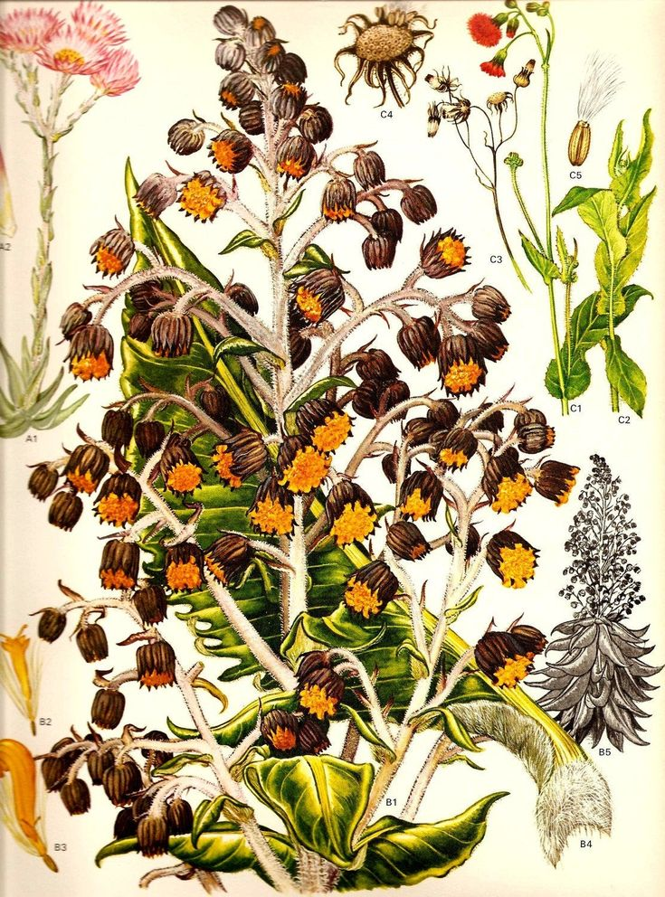 Vintage Botanical Print 1970 TROPICAL Color Art Wild ...