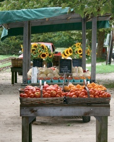 1000 Images About Roadside Veggie Stand On Pinterest