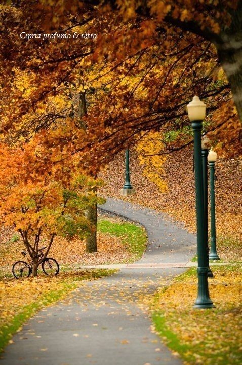 Walking path in autumn colors.....