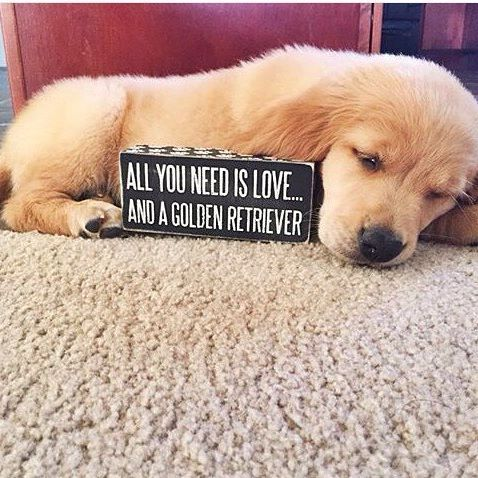 Please give me  1. The sign  2. The dog  #welovegoldens
