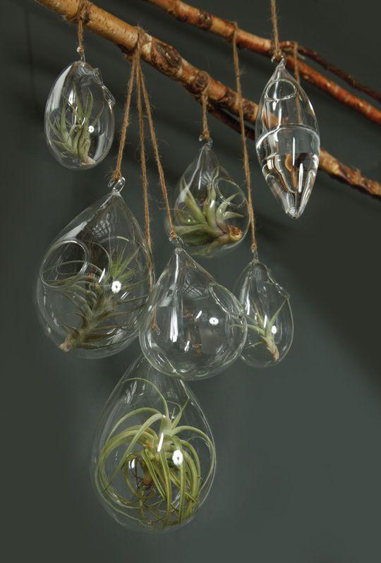 images about air plants Terrarium, Hanging