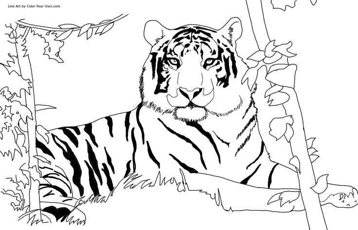 gorillia Coloring Pages | Free Printable Tiger Coloring Pages For Kids