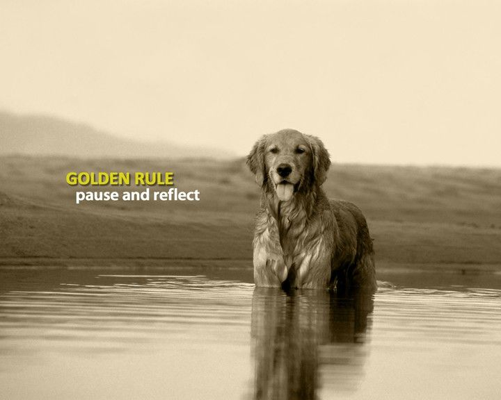 golden rule... pause and reflect
