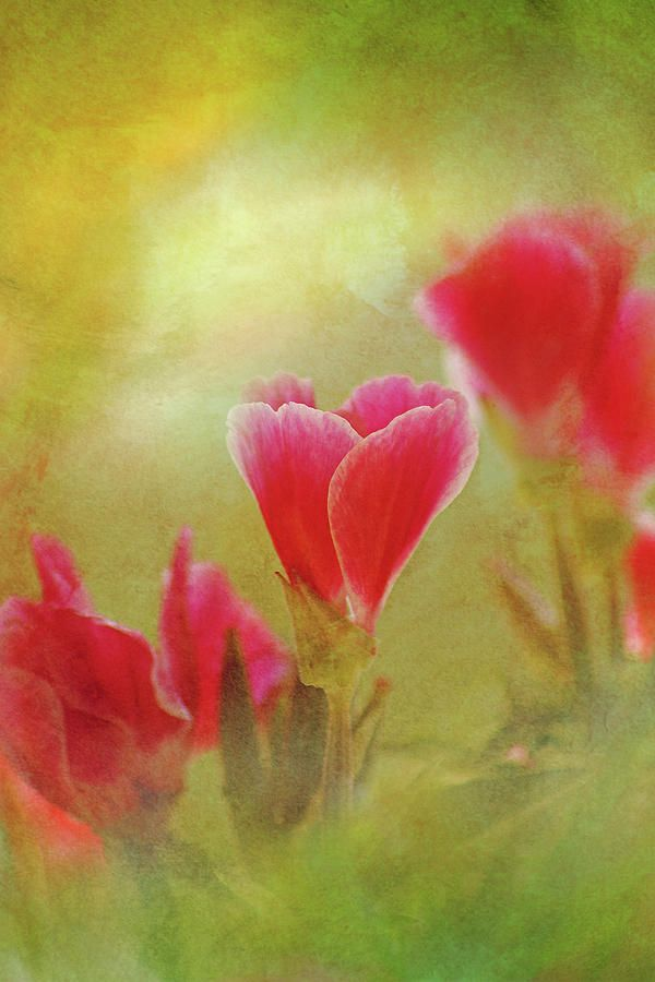 Artwork Photograph - Flowers Whispers by Larysa Koryakina. Available in many sizes and in Acrylic, Metal, Canvas, Framed and Standard Print. Also as a Greeting Card. Photography Art design for Office and Home Decor.