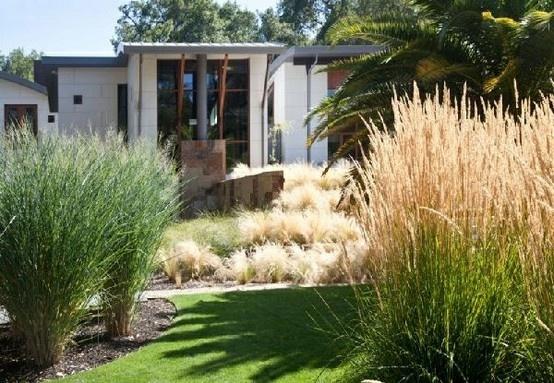 Love native grasses !! Very Australian.