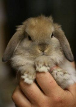We all want our favourite bunny to live as long as possible, This lense looks at the factors affecting a rabbits life span    Rabbit life span is...