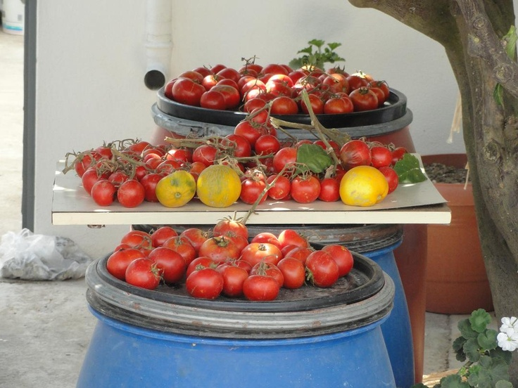 ... the Crete You Are Looking For!  Cretan Tomatoes...  www.cretetravel.com