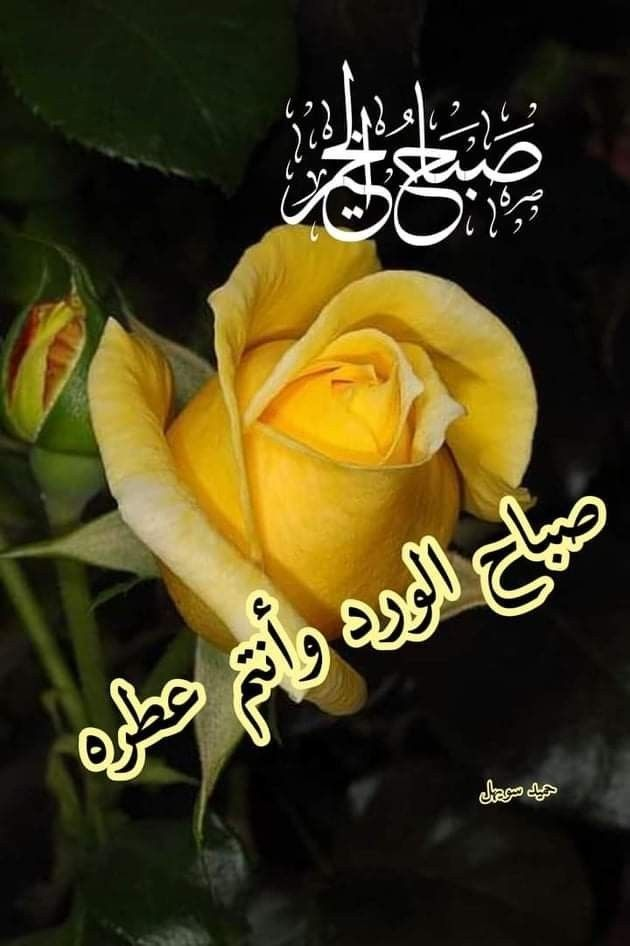 Pin By Abir Reine On منشوراتي المحفوظة Islamic Quotes Wallpaper Beautiful Morning Good Morning