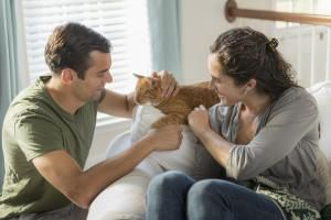 Everything You Need to Know About Raising Your Very First Cat