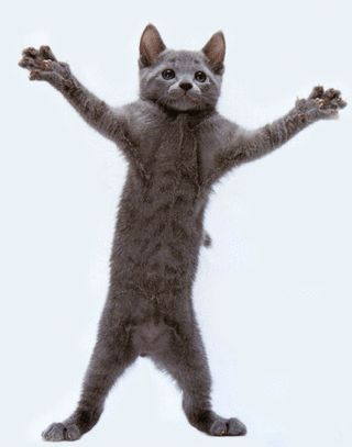 25+ best ideas about Dancing cat gif on Pinterest | Kitty gif ...