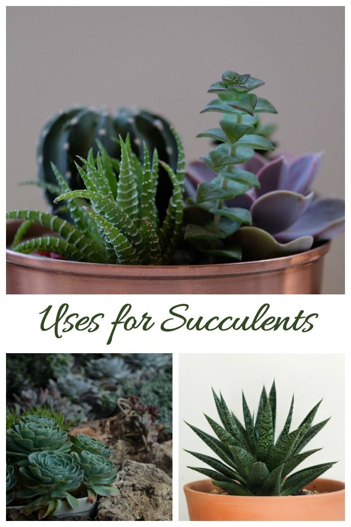 How To Care For Succulents Succulent Plant Care Growing