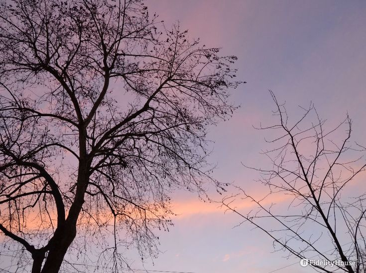 Da lassù possono osservare bene l'alba e poi il tramonto del sole, e gli altri alberi che già sono in fiore o quelli che si sono rivestiti di un verde tenero.
