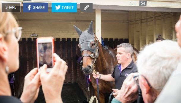Winx Starts Preparing her for the most important race of the year in Autumn. #Profitablepunting #hourseracingbettingonline.