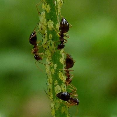 O mundo das super formigas