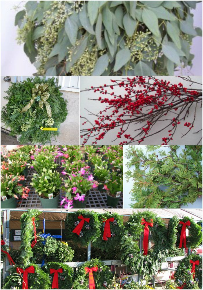 Christmas Tree Flower Power : Best images about meet our members on trees