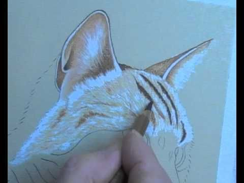 Cat Portrait in Pastel Pencils - Lesson 2