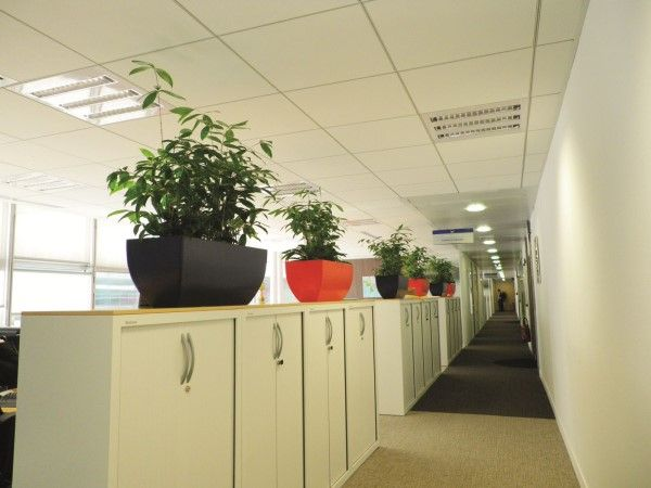 ... Perfect Office Plants
