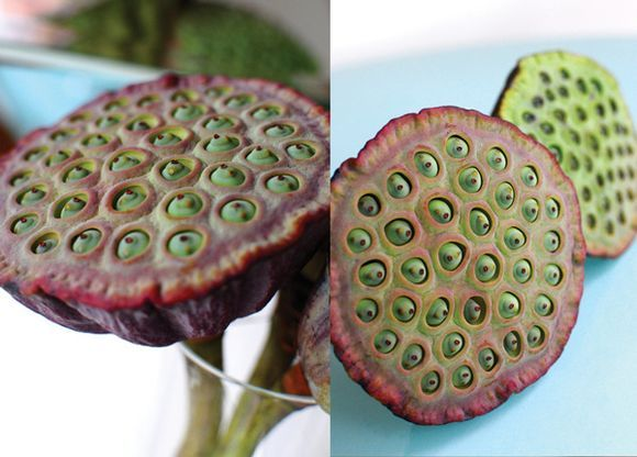 Lotus Flower seed pods make fabulous stamps. They are also symbols of Buddhism. Ancient India block.