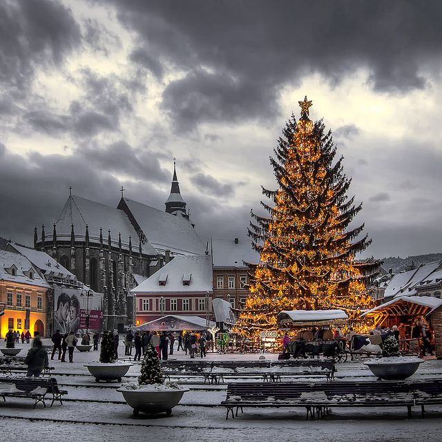 Winter Christmas Tree Brasov - Romania