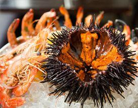 10 Best Downtown Santa Barbara Restaurants