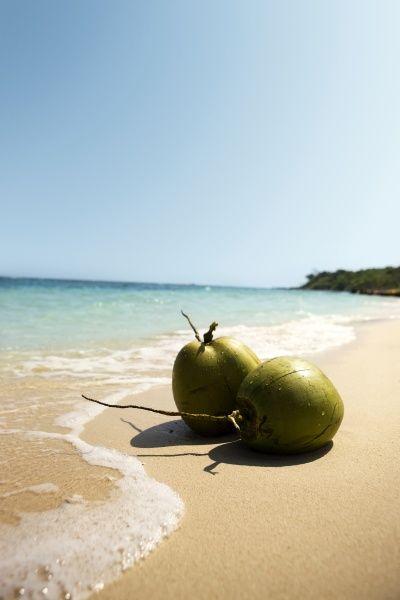 Kookoksien kanssa rannalla! #coconut