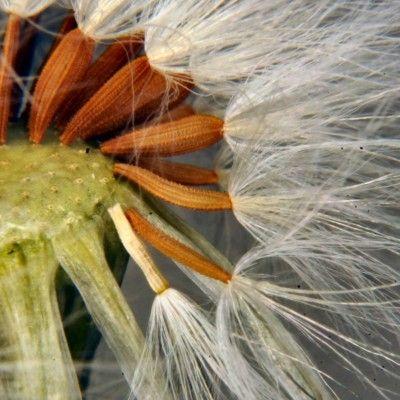Rośliny wykształciły różnorodne nasiona; niektóre z nich wymagają specjalnego potraktowania. Fot. Jusben - morguefile.com