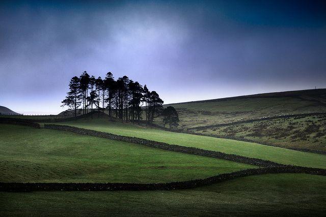 Landscape, Rain, Copse, UK by Richard:Fraser, via Flickr
