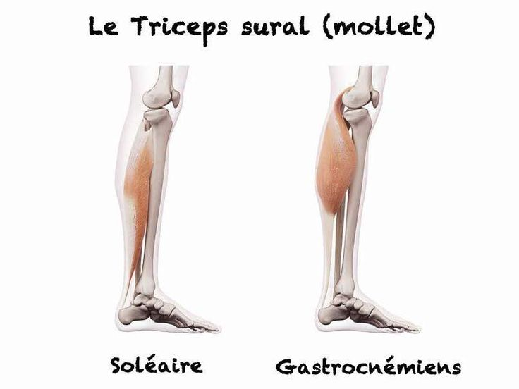 Le triceps sural est composé des muscles soléaire et gastrocnémiens. Présentation anatomique, exercices de renforcement et d'étirement, on vous dit tout !