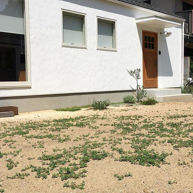 芝生の種を蒔いたはずが芝はまったく生えずに雑草ばっかり生えてくる〜〜 #草むしり #雑草 #リアルナチュラルガーデン #木製ドア #モルタル壁