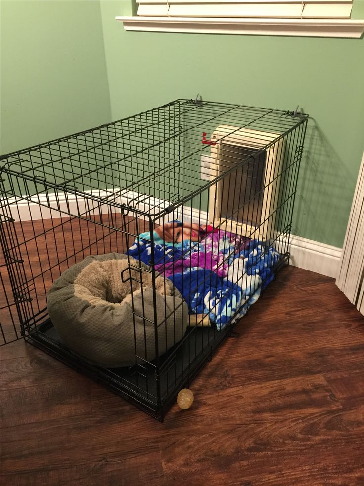 Indoor dog kennels indoor dog kennel large diy dog house for Design indoor dog crate