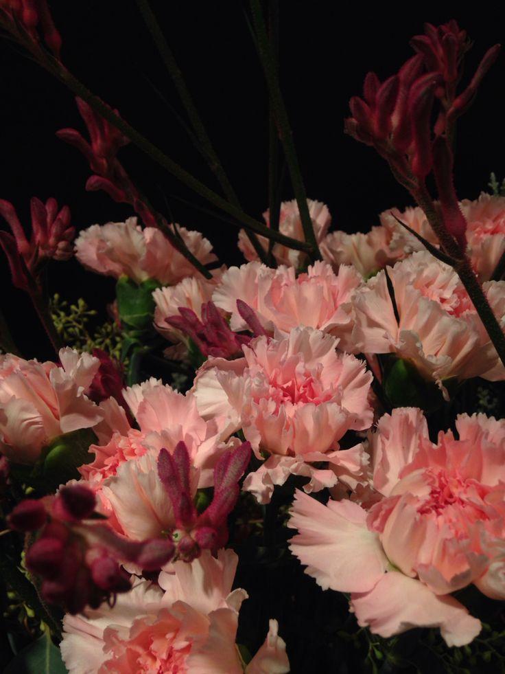 #carnation