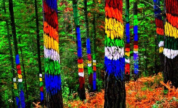 Лес Ома - ожившая сказка. Страна Басков. Bosque pintado de Oma. Волшебный лес с разрисованными деревьями. Прекрасная прогулка для детей и взрослых. Видео.